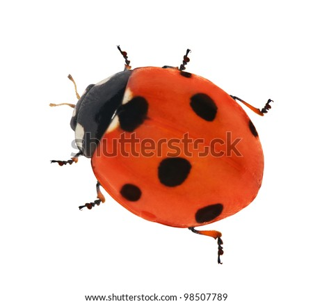 seven points ladybug isolated on white background