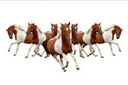 seven running horses