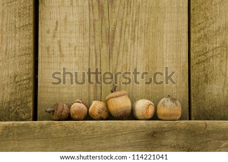 Several acorns are perched on the sidewall of a shed which appears to look like they have gathered on a stage.