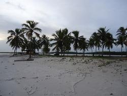 Several coconut trees on Praia do Saco in Sergipe, northeast of Brazil
