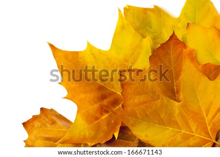 Several colored autumn leaf isolated on white background.