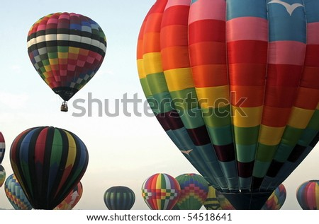 Several colorful hot air balloons inflated and ready for take off.