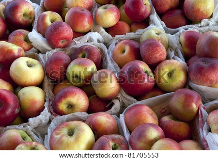 Several containers of fresh-picked macintosh apples at the orchard.