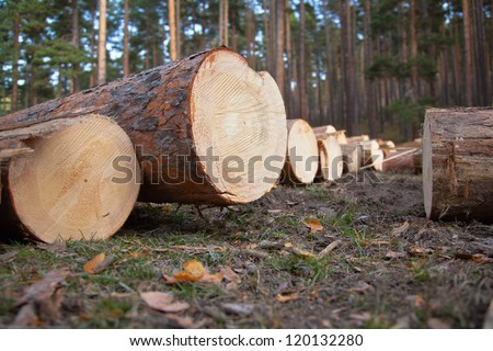 Several cut logs on the ground.
