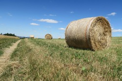 several dried straw bales on a mown meadow in the summer