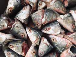 Several fish head backgrounds cut out