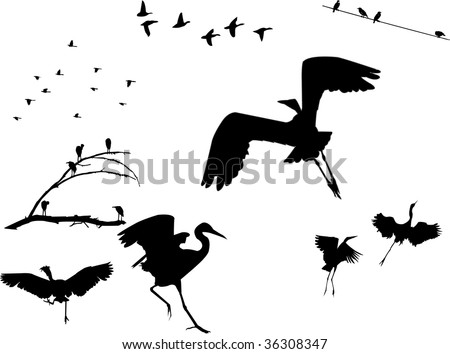 stock photo : Several flock of birds silhouettes, sitting on a dead tree, on