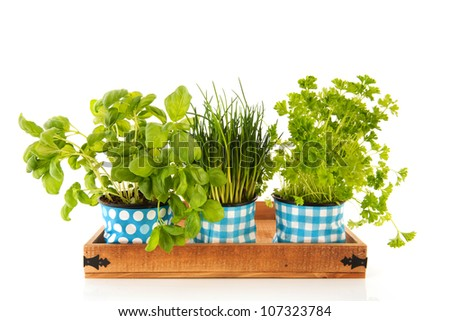 Several kitchen herbs on wooden tray isolated over white background