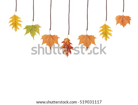 Several leaves hanging on tree branch #519031117
