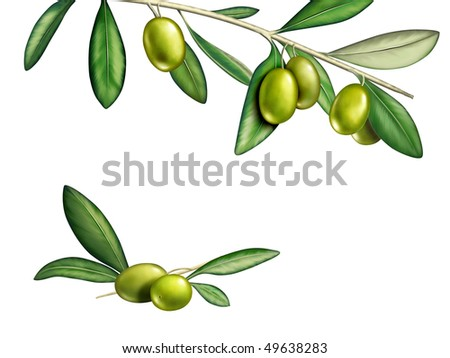 Several olives on a branch. Digital illustration, clipping path included.
