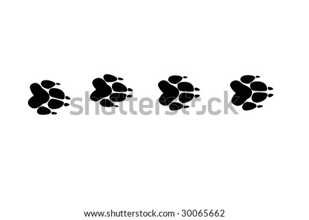 stock photo : several paw prints of wolf