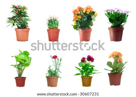 Several potted plants isolated over white background