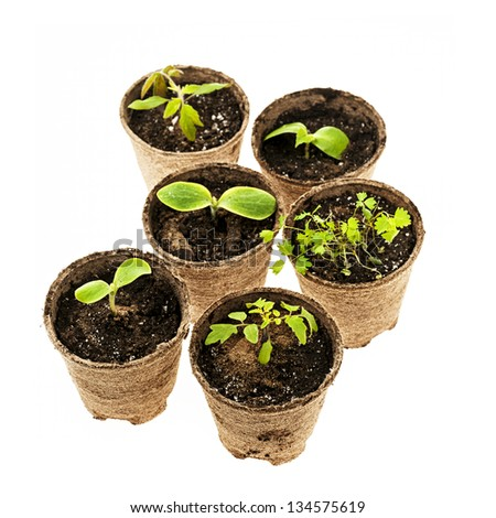 Several potted seedlings growing in biodegradable peat moss pots isolated on white background
