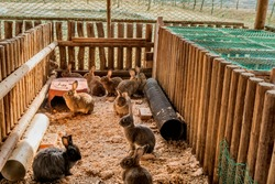 Several rabbits in wood log enclosure at public park on autumn day. Selective focus on rabbits at rear of enclosure.