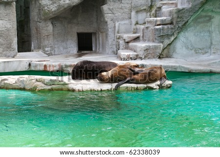Several Sea lions standing in the sun at the Wien Zoo