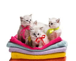 several small furry gray kittens siting on stack colorful towel on white background