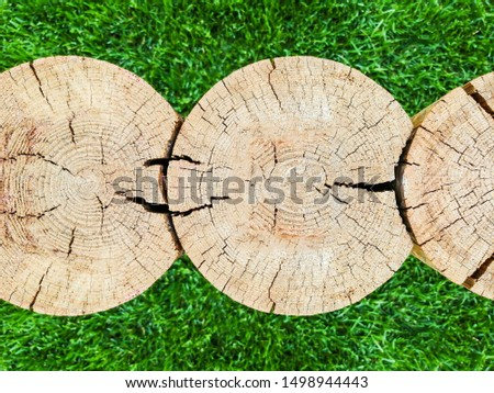 Several tree trunks. Cross section. Cross section of logs texture. Wood tree trunk texture, close-up on a background of green grass. Located transversely