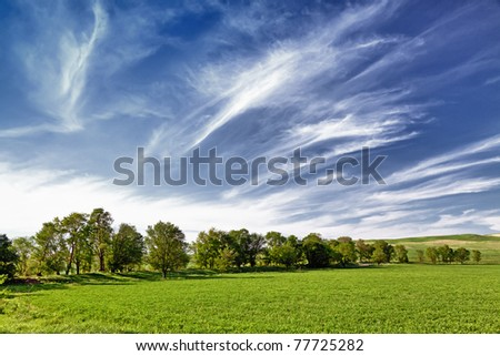 Several trees on the field and clouds