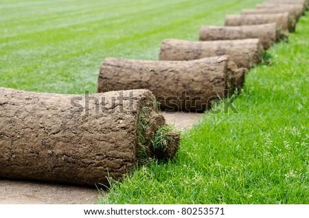 Several turf grass rolls
