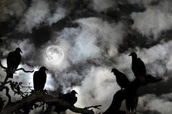 Several vultures are viewed as silhouettes by a rising full moon against a spooky black sky with white clouds