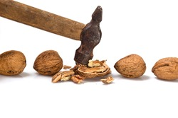 Several walnuts, one of them is broken with a hammer.