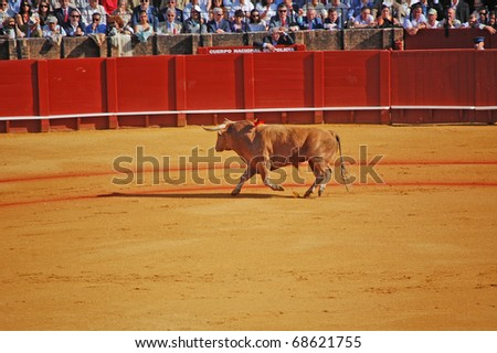 SEVILLE - APRIL 30:  A brown bull circles the stadium looking at the sold out crowd at the Plaza de Toros de Sevilla April 30, 2009 in Seville, Spain.