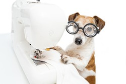 Sewing clothes process. Dog sew white clothes. Cute pet Jack Russell terrier in glasses looking at camera working sewing machine sews white t-shirt. Fashion designer tailor in light white workshop