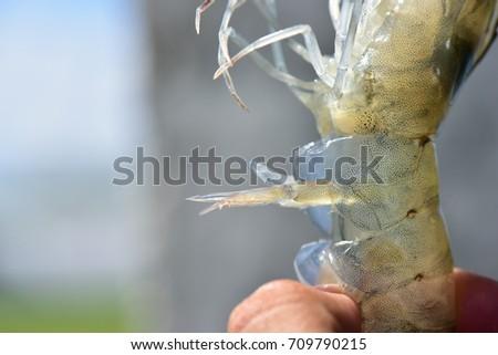 free sex lobster