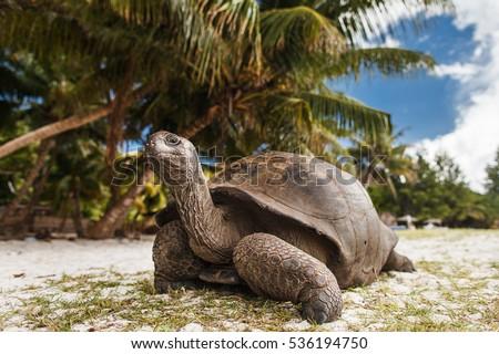 Seychelles. Giant tortoise on Curieuse Island. Stock photo ©