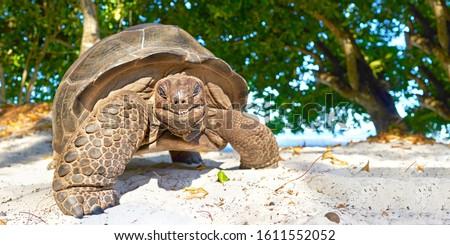 Seychelles giant tortoise - wildlife, smiling happy turtle Stock photo ©