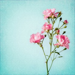 Shabby Chic Background with rose