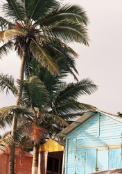 Shabby wooden cabin logs at seaside under tall coconut palm trees, beautiful beach in the morning, caribbean style, pastel toned vertical