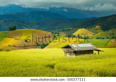 Shack in the rice field  #500377111