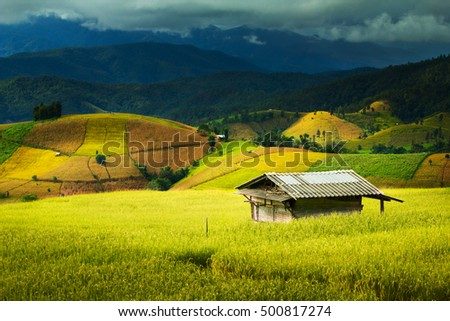 Shack in the rice field ,Pa Pong Pieng , Mae Chaem, Chiang Mai, Thailand #500817274