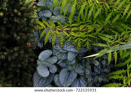 Shade garden plant combination #722535931
