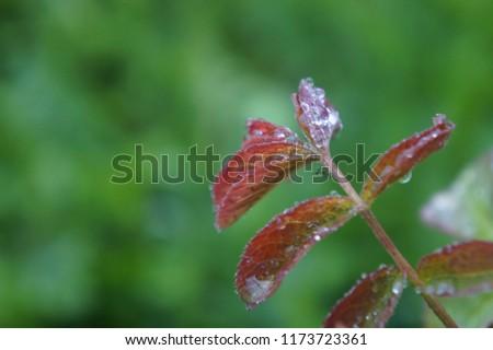 shades of rain #1173723361