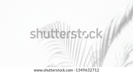 Shadow background of natural palm leaves and palm tree falling on white wall texture for background and wallpaper, black and white tone