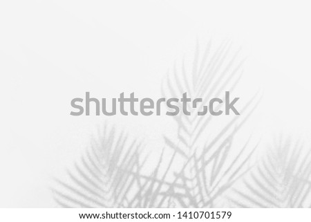 Shadow background of palm leaves white wall texture background  #1410701579