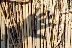 shadow by hand. silhouette of a hand with distinct outlines of the fingers and palms on the background of an old, dry cane. Vintage warm photo with shadows.