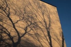 Shadow cast of tree branches on building on sunny day. Sun light and plant silhouette. Daylight art.
