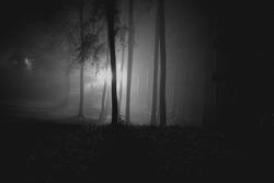 shadow dark night wooden forrest