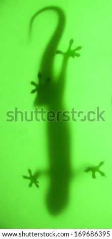 Stock Photo shadow lizard on green