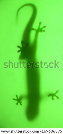 Stock Photo shadow lizard on green
