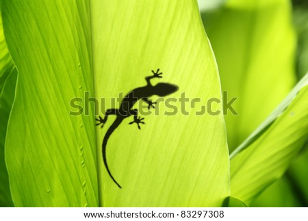 Stock Photo shadow of a gecko on a banana's leaf