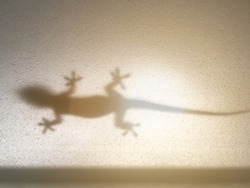 Shadow of a lizard crawling on window glass during sunset.