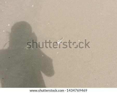 Shadow of a person taking picture of a white spiny seashell on sand beach