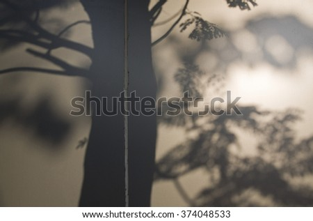 Shadow of a tree on a concrete wall ,morning light.  #374048533