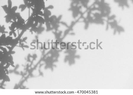 shadow of leaf tree on wall #470045381