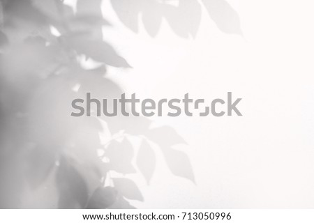 shadow of leaf tree on wall #713050996