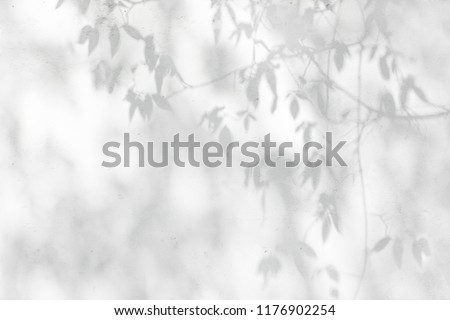 Shadow Of Leaves Reflected On The White Wall